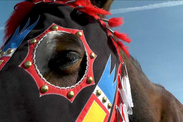 close up of horse's face