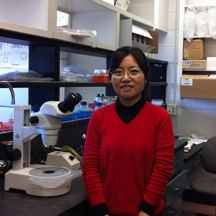 Xiaobo Wang, a first year PhD student from the Cellular Molecular and Microbial Biology Program